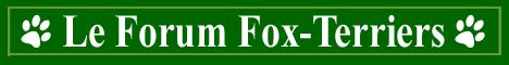Le forum des fox-terriers Index du Forum