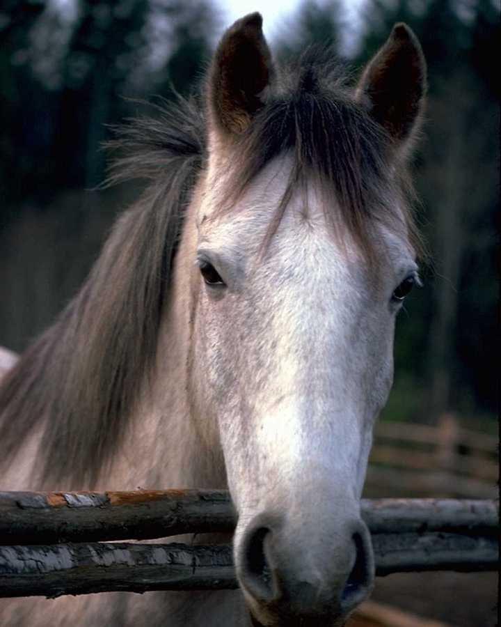 il a une bonne t te ce cheval le r gne animal blog de fanfan. Black Bedroom Furniture Sets. Home Design Ideas
