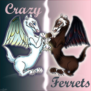 "les ""crazy ferrets"" Index du Forum"