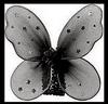 CT DE butterflyDsign