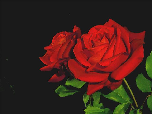ROSE Index du Forum